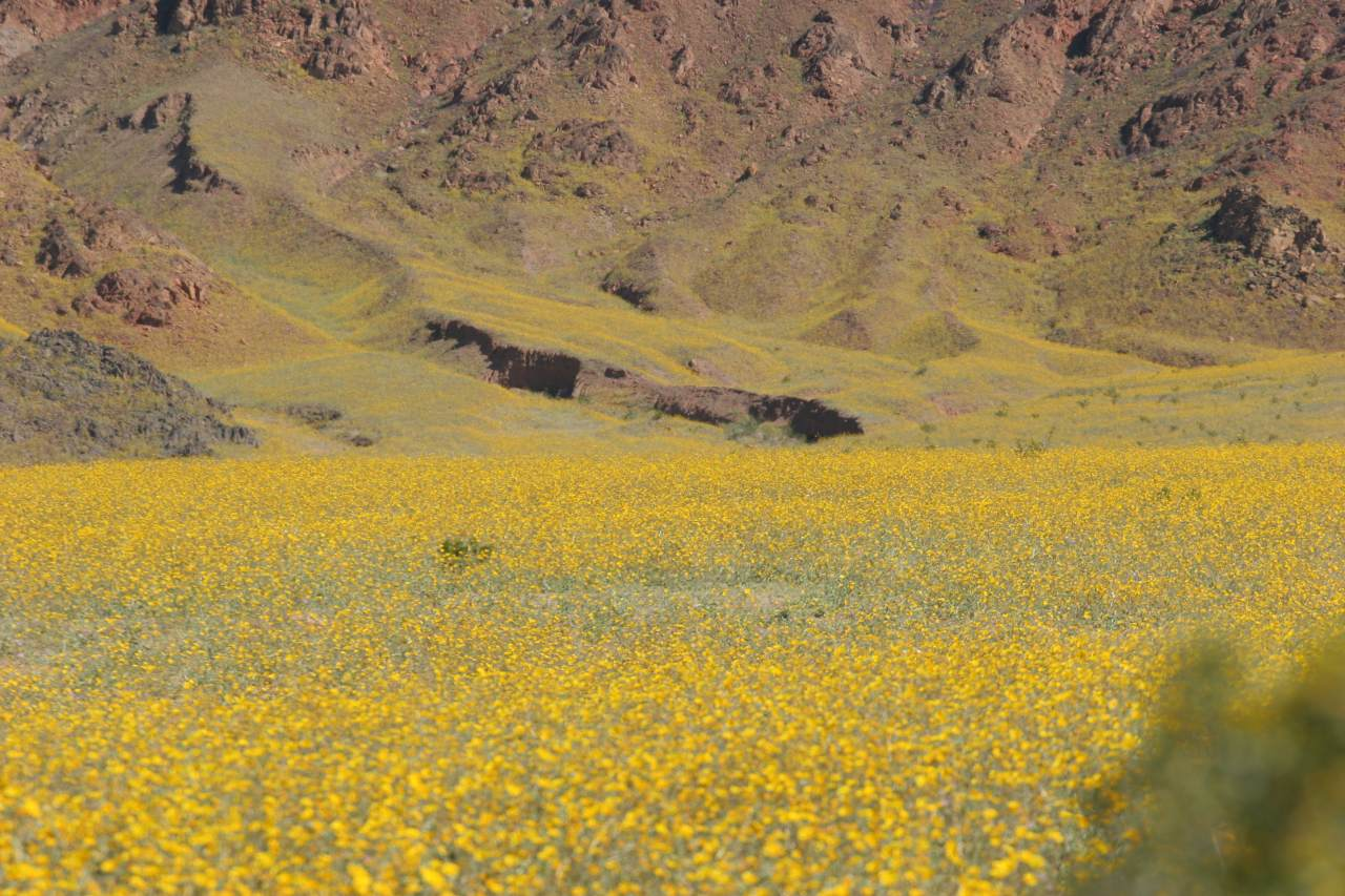 Carpets Of Wildflowers Part One