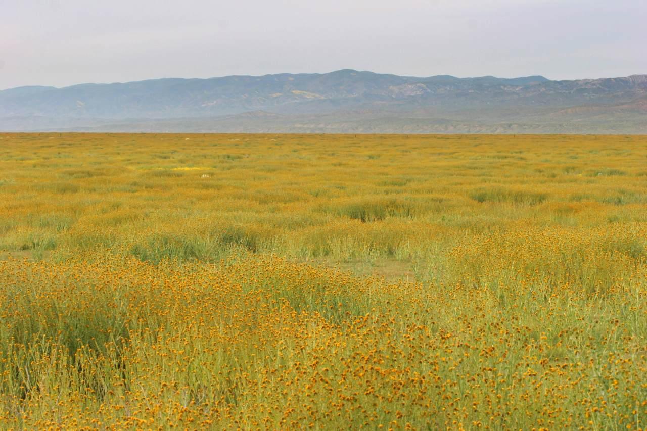Carrizo Plain National MonumentPlain Pictures